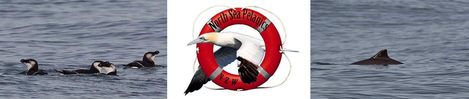 northseapelagics